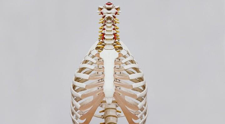Capital osseux : allégations sur le calcium